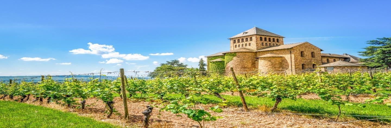 Explore Frankfurt's Vineyards Shutterstock 381720661